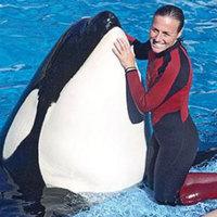 Megölte oktatóját a kardszárnyú delfin