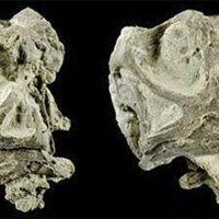 Új dinoszauruszfaj maradványaira bukkantak Utah keleti részén