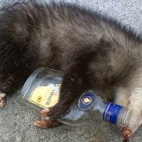 Rég elpusztult oposszumot próbált újraéleszteni egy férfi