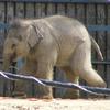 Asha mindenhol - avagy állatkertben jártunk