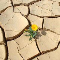 A túlélés záloga: előre kell menekülnöd!