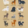 Itt vannak egy infografikán a kelet-európai kutyák