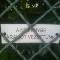 Vezető növények