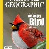 A mérges madarak léteznek!