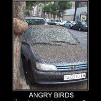 Vicces madarak