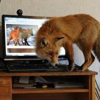 Telepítsd a Firefoxot a gépedre!