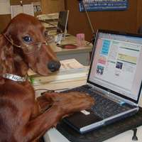 Cyber-kutya
