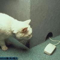 Macska-egér játék!
