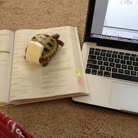 CUKI² - A matekozó pelenkás teknőc