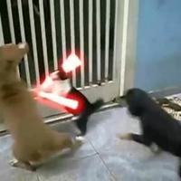 Lézerkardos macska (videó)