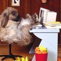 Húsvéti geek nyúl!