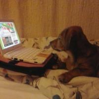 A kutya sem olvas minket...