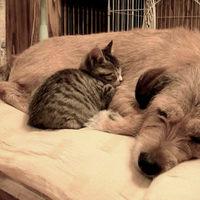 Kutyát szült egy macska