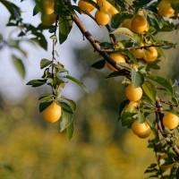 Hogyan teremj olyan gyümölcsöt, ami megmarad?