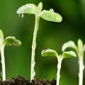 Ezt a négy célt tűzd ki, hogy Jézushoz hasonlóan növekedhess!