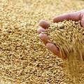 Vess ma, majd várd türelemmel az aratást
