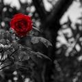 Hogyan mozdulj ki a gyászból az öröm felé?