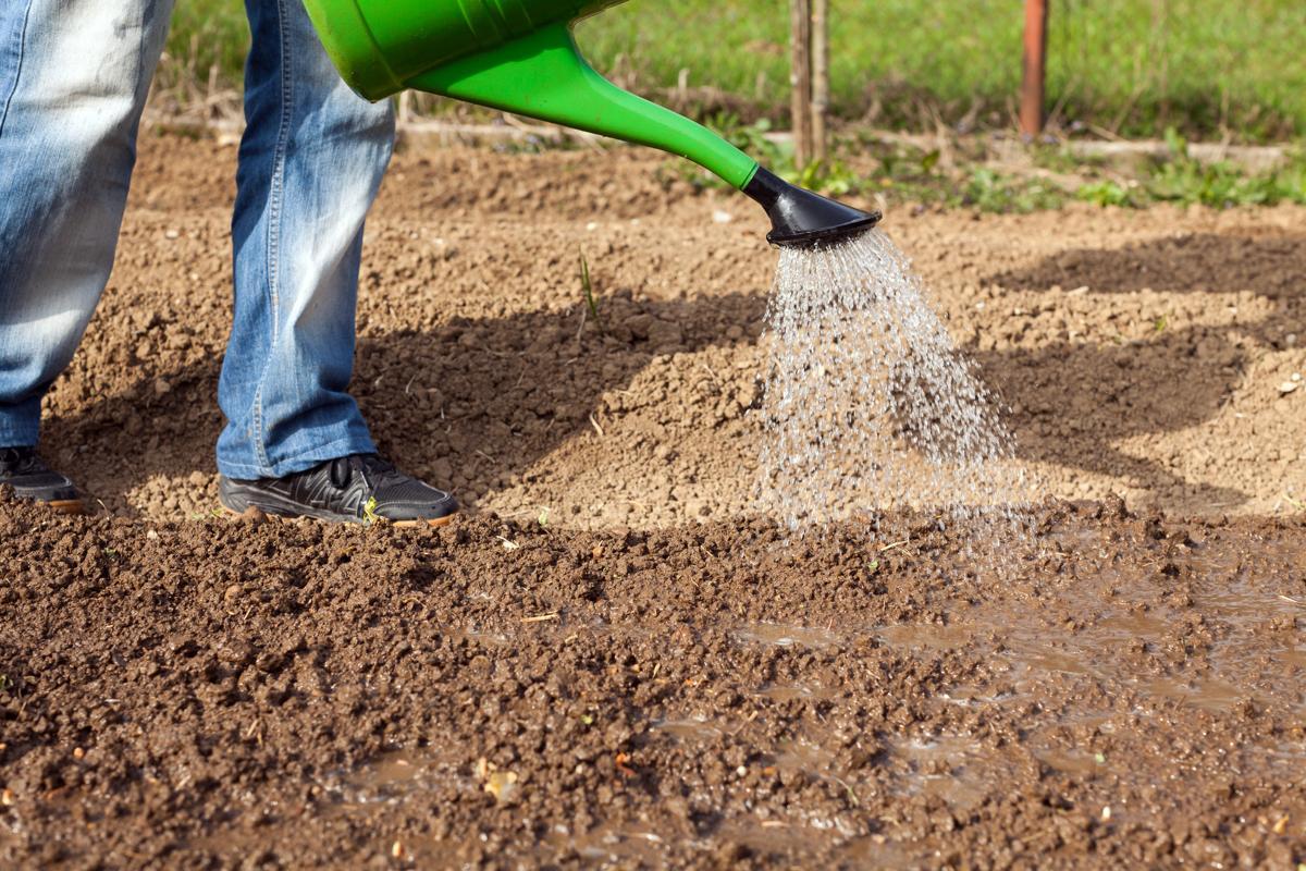 1200-484012963-watering-soil.jpg