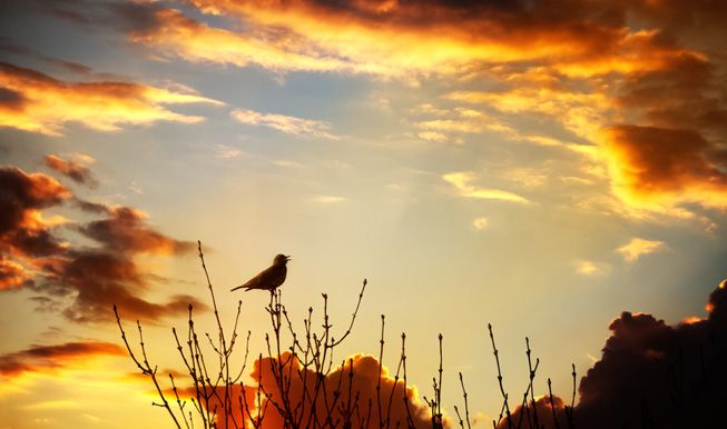 bird-chirps-on-treen-sunset_jpg_838x0_q80.jpg