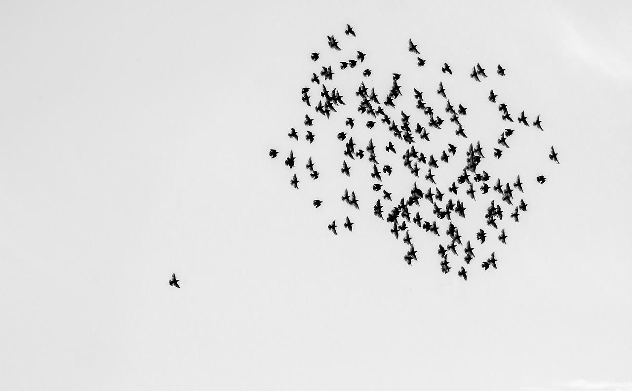 birds-1714542_1280.jpg
