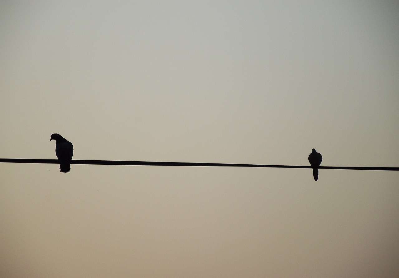 birds-5380908_1280.jpg