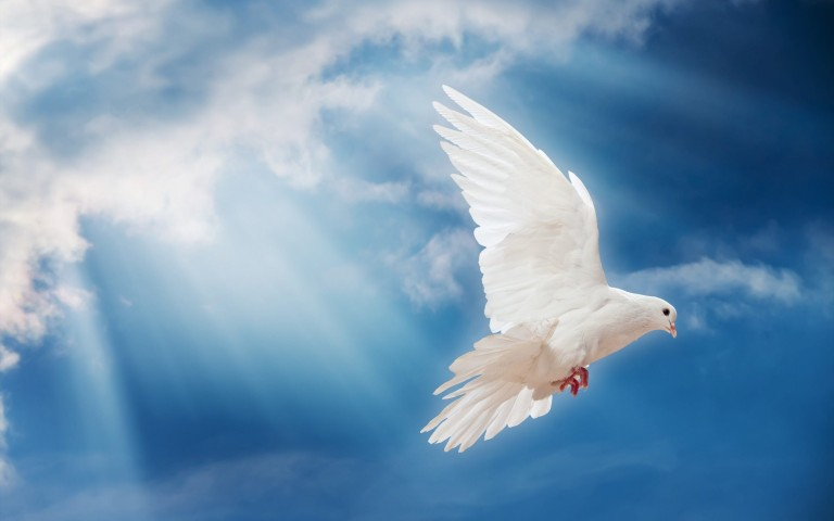 dove-bird-wallpaper-010.jpg