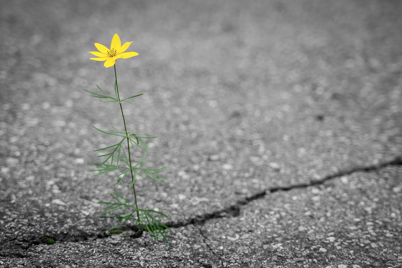 flower-4346049_1280.jpg