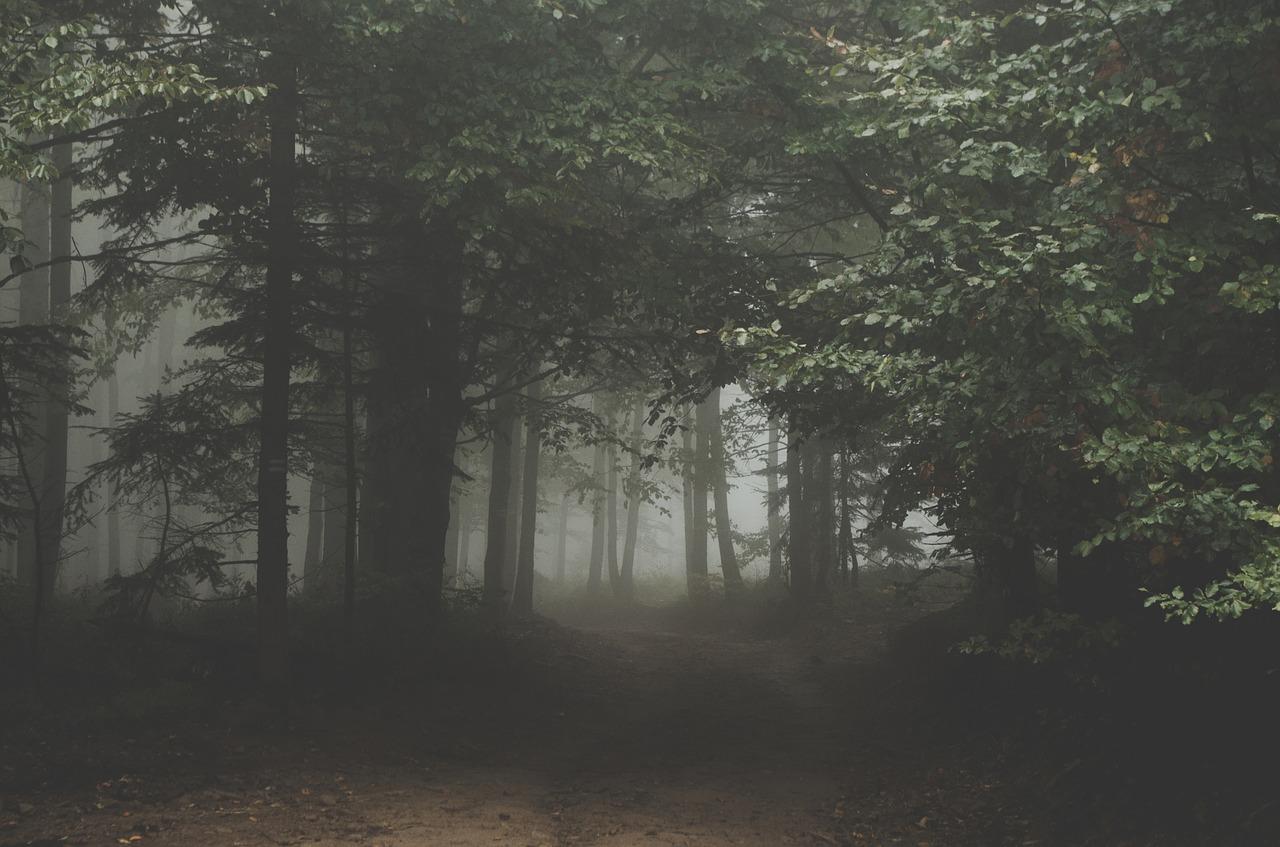 forest-1031022_1280.jpg