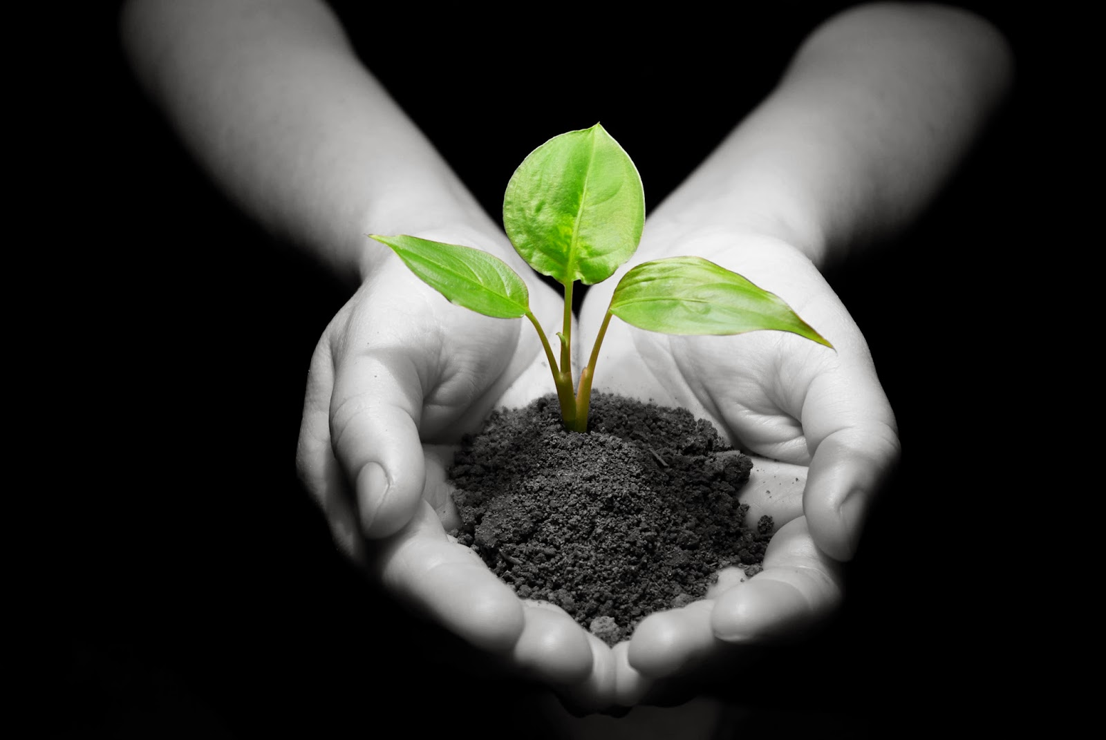 hands-with-plant-dirt3.jpg