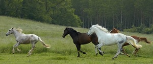 lovak.jpg