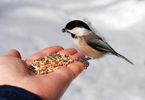 provision-for-a-bird.jpg