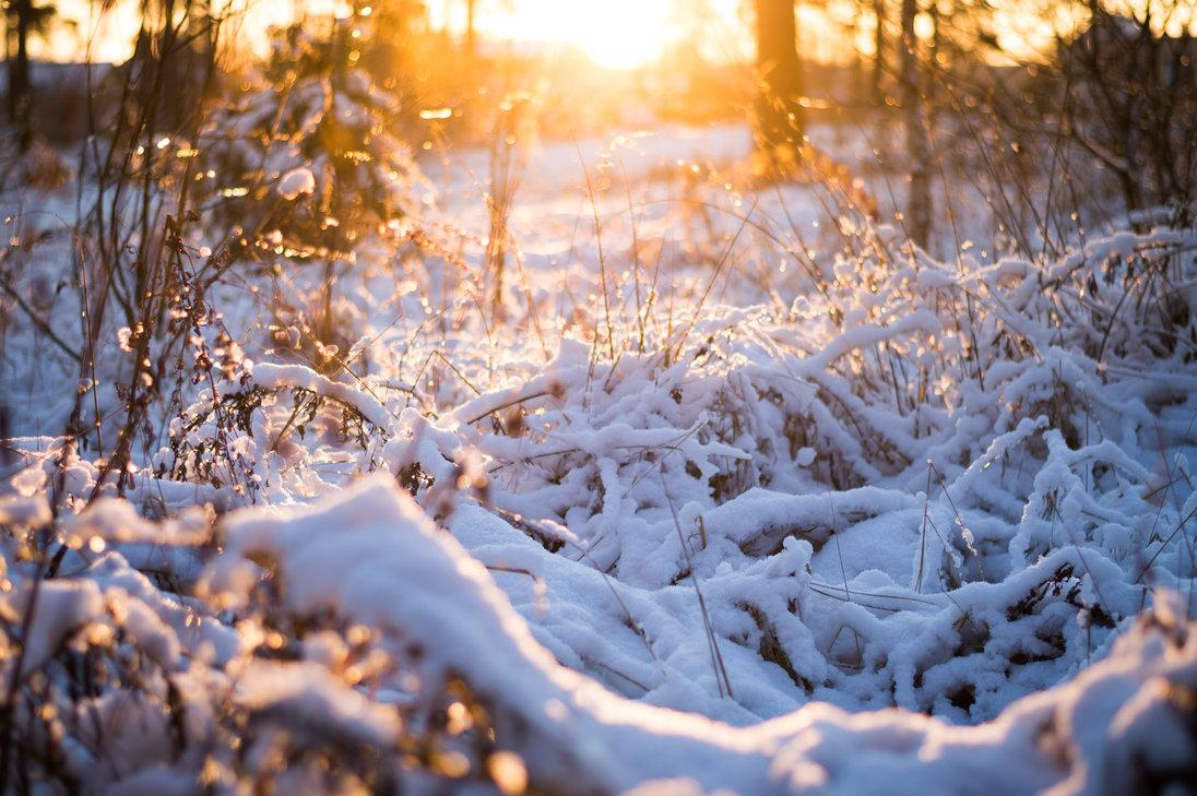 winter_sun_by_spellozz-d9ifxhb.jpg