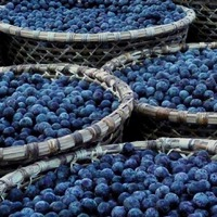 Vitaminok és ásványi anyagok az acai bogyóban