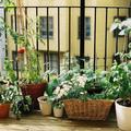 Ezekre figyelj, ha a városban termesztesz zöldséget!