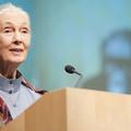 Főzhettem Jane Goodall-nak