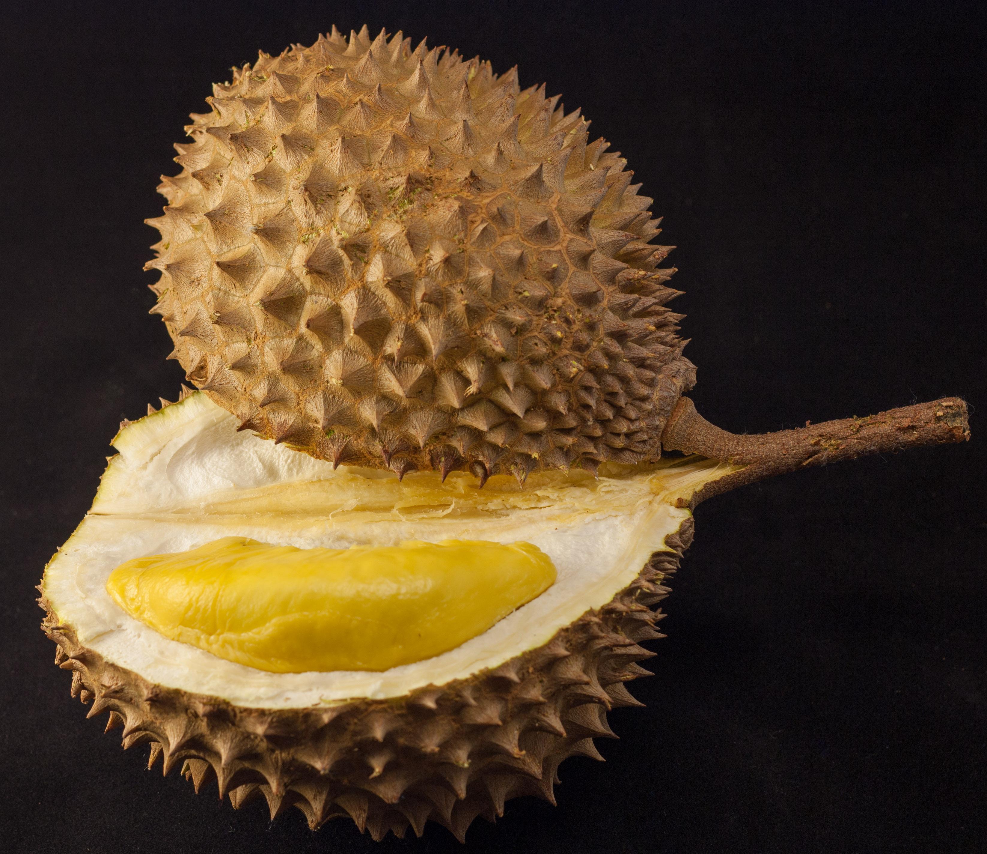 durian_in_black_1.jpg