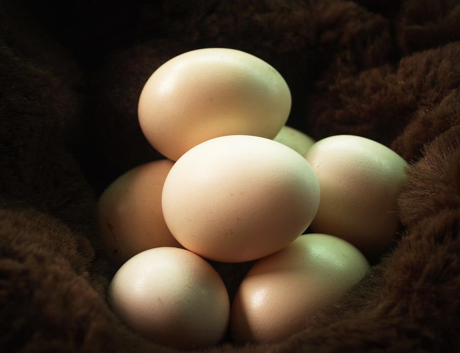 egg-1549359_960_720.jpg