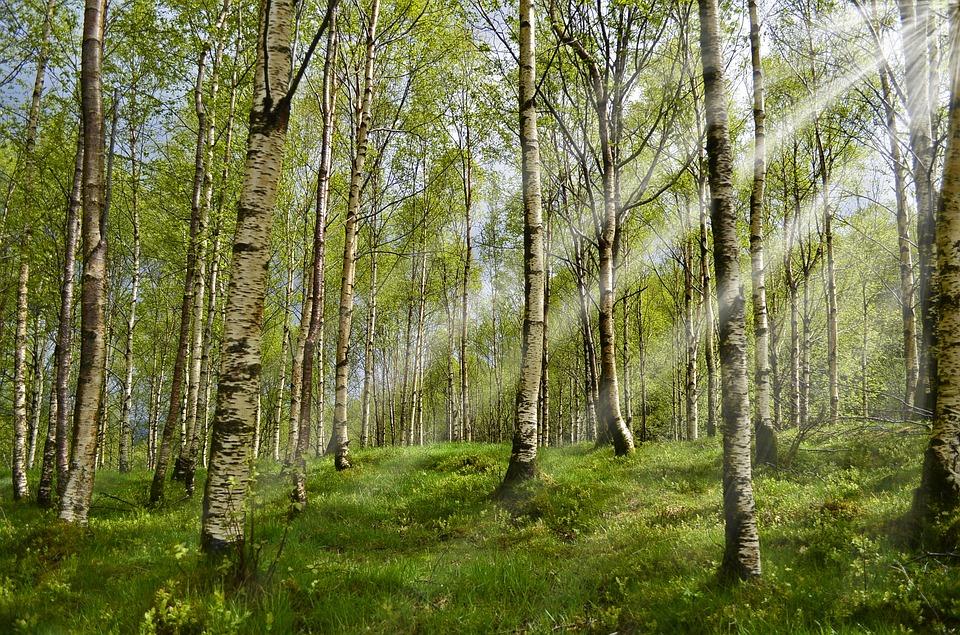forest-2165356_960_720.jpg