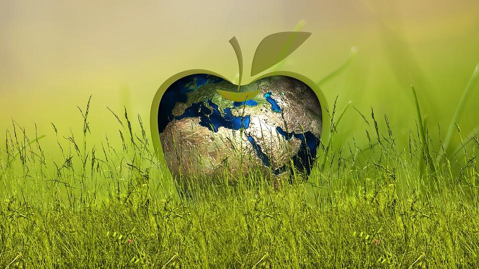sustainability-3295824_960_720.jpg
