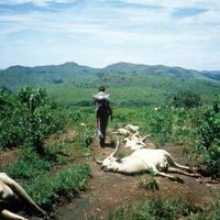 Az afrikai halálszél