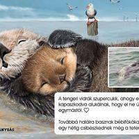 Eldobált, kirúzsozott bébifóka tetemek Újpalotán