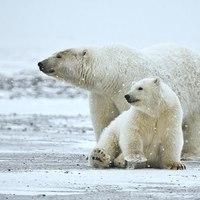 Az Északi-sark nagy túlélője