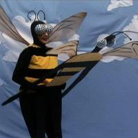 Kúrós kisállatok: méhek