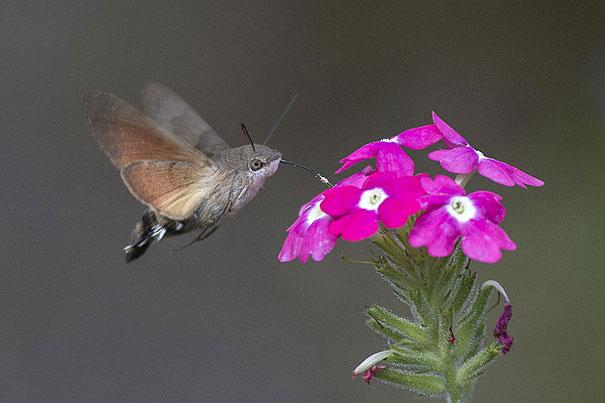 8-hawk-moth.jpg