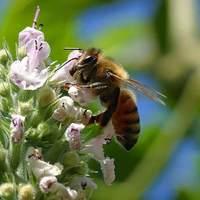 Barcelonai kutatás a felmelegedés pollenizációs problémájáról