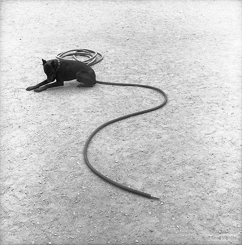 A farok  © René Maltête