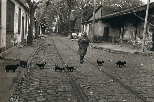 Robert Doisneau, Bercy macskák, 1974<br />