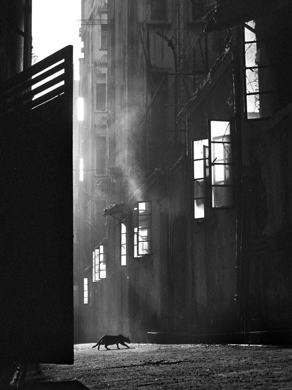 Ho Fan, A keresés, 1960<br />