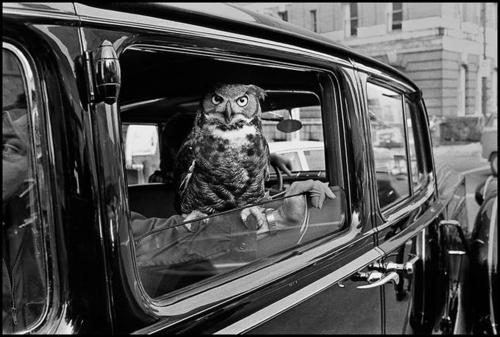 Toshio Tamaki, Owl riding in style on Boylston Street, Boston<br />