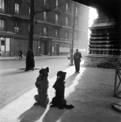 Robert Doisneau, Kutyák a Rue de la Chapellen<br />